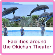 Facilities around the Okichan Theater